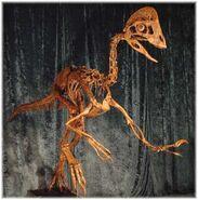Oviraptor skeleton