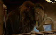 Woolly mammoth NATM