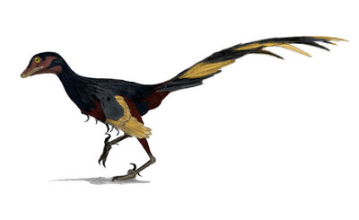 Jinfengopteryx.jpg