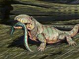 Ophiacodon