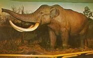 Penn-Museum-mastodon-1000x6201-700x434