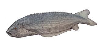 Pharyngolepis.jpg