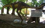 Dinoland struthiomimus