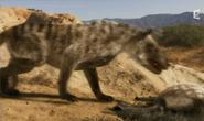 Hyaenodon Horridus