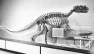 Smithsonian Ceratosaurus 60s