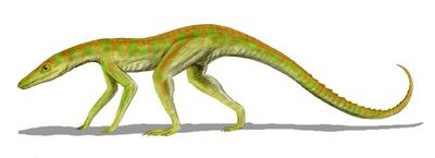 Terrestrisuchus.jpg