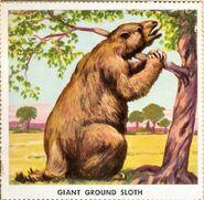 Ground-sloth-700x683