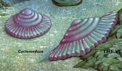 Cyclomedusa.jpg