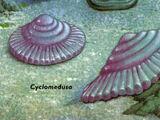 Cyclomedusa