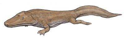 Cyclotosaurus.jpg
