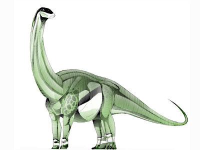 Kotasaurus.jpg