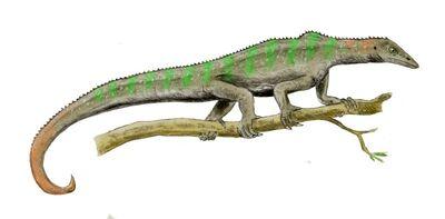 Megalancosaurus.jpg