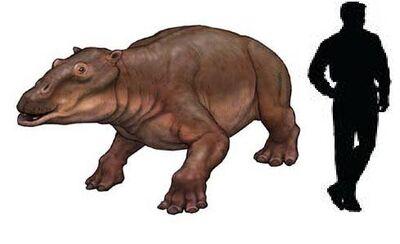Paleoparadoxia.jpg