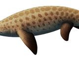 Sclerocormus