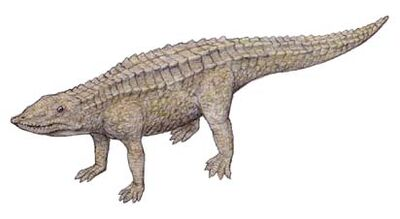 Aetosaurus.jpg
