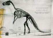 Hadrosaur-skeleton-1000x713