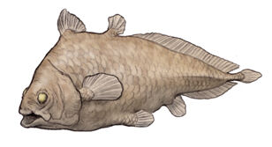Allenypterus.jpg
