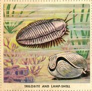 Trilobite8-700x692