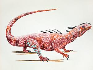 Acleistorhinus.png