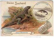 Iguanodon Suchard