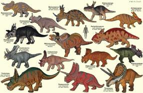 CeratopsidaeModels.jpg
