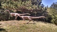 George s eccles dinosaur park coelophysis by dinolover09 dcoo4dh-fullview