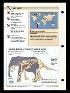 Wildlife fact file Giant Ground Sloth back
