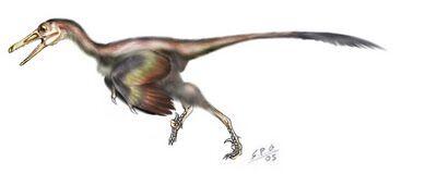 Buitreraptor.jpg