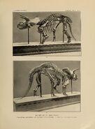 Triceratops skeleton National Museum