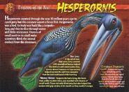 Hesperornis front