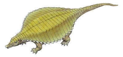 Paratypothorax.jpg