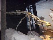 Carnotaurus MEF 02