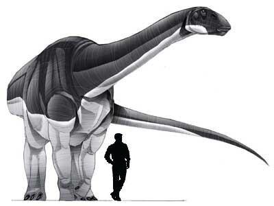 Abrosaurus.jpg