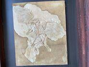 Dinoland USA Solnofhen Archaeopteryx Fossil