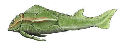 Pterichthyodes.jpg