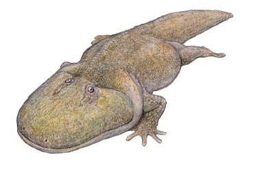 Spathicephalus.jpg