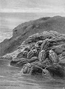 Trilobites large