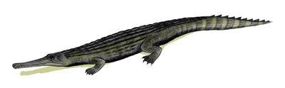 Dyrosaurus.jpg