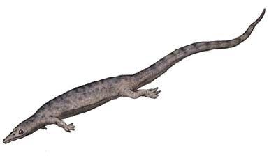 Pleurosaurus.jpg
