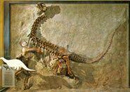 Camarasaurus-juvenile-skeleton-1