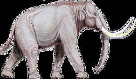Mammuthus trogontherii122DB.png