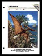 Wildlife fact file Pteranodon front