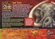 Columbian Mammoth back