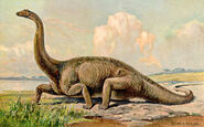 Diplodocus Heinrich Harder