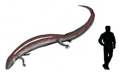 Eogyrinus.jpg