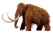 1531-woolly-mammoth-resurrection
