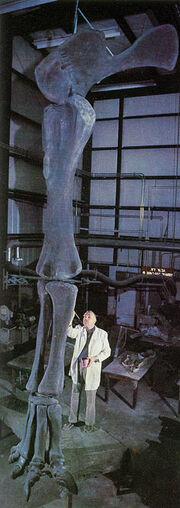 Ultrasaurus-d1.jpg