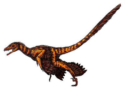 Sinornithosaurus.jpg