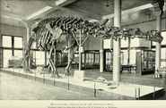 Annual report of the American Museum of Natural History for the year (1901) (18426246345)