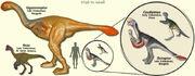 OviraptorModels.jpg